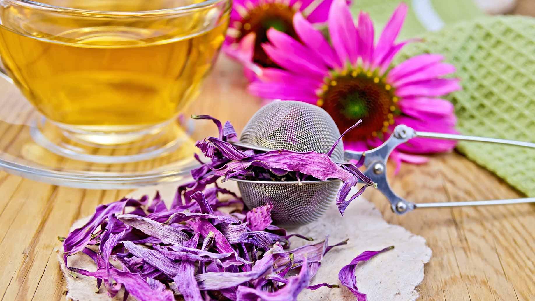 echinacea pink flowers dried loose leaves tea