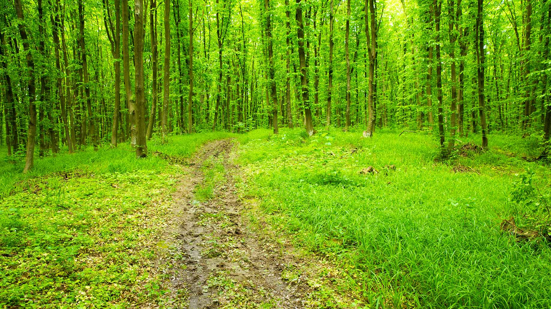 Greenery Forest Bathing Nature Walk Forest Remedies For Me