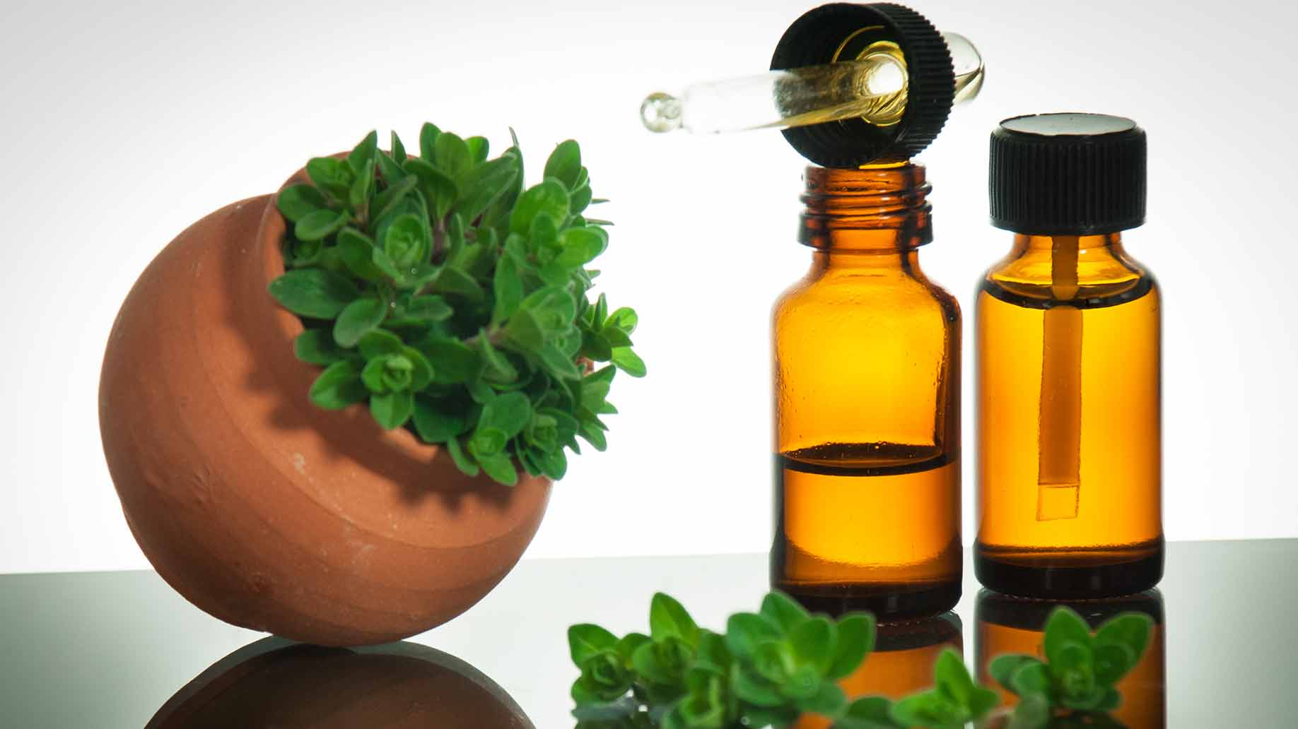 pure oregano essential oil dropper and plant
