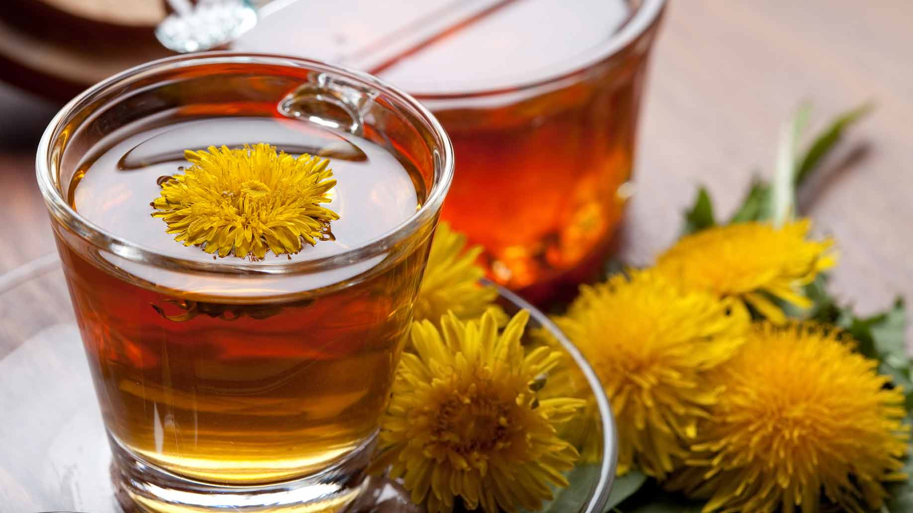 dandelion tea liver cleanse fresh dandelion leaves