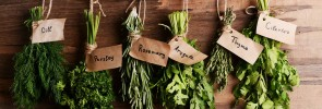 herbs fresh organic green bunches