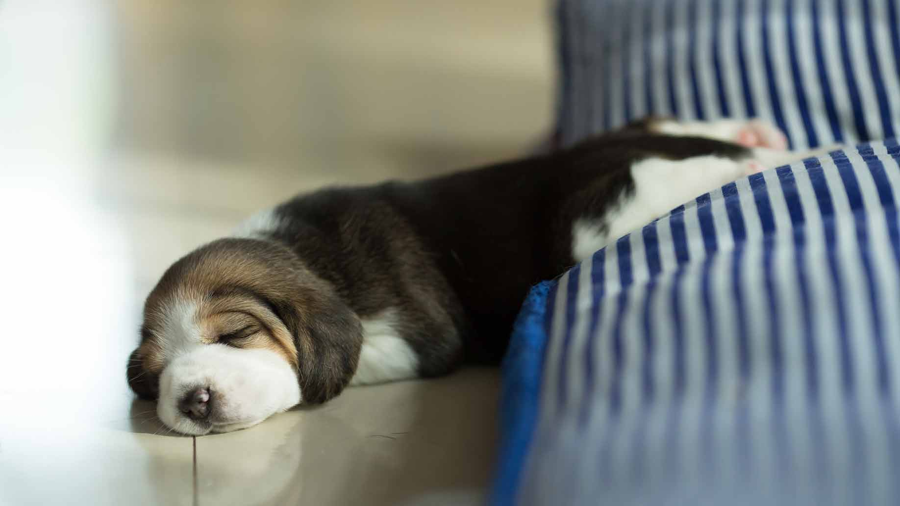 proper sleeping positions sleeping puppy headaches migraines natural remedies