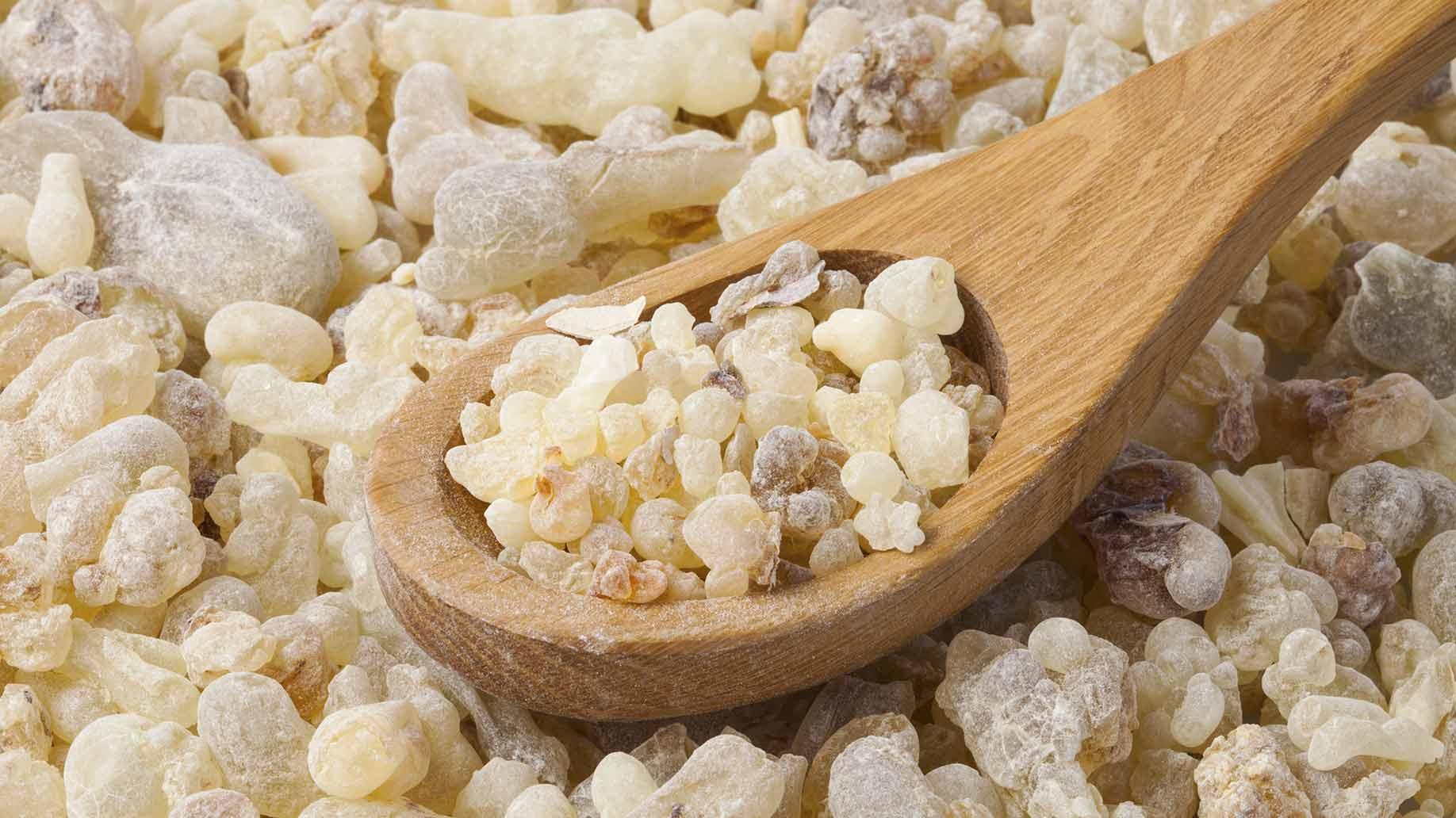 indian frankincense gum resin boswellia tree arthritis natural remedies