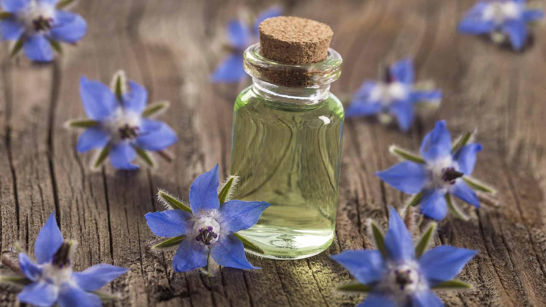 borage seed oil flowers arthritis natural remedies