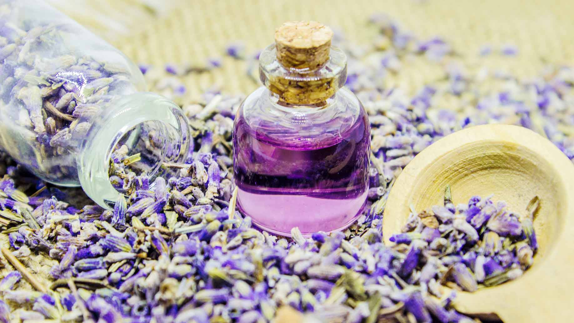 lavender essential oil natural health benefits anxiety insomnia period pain