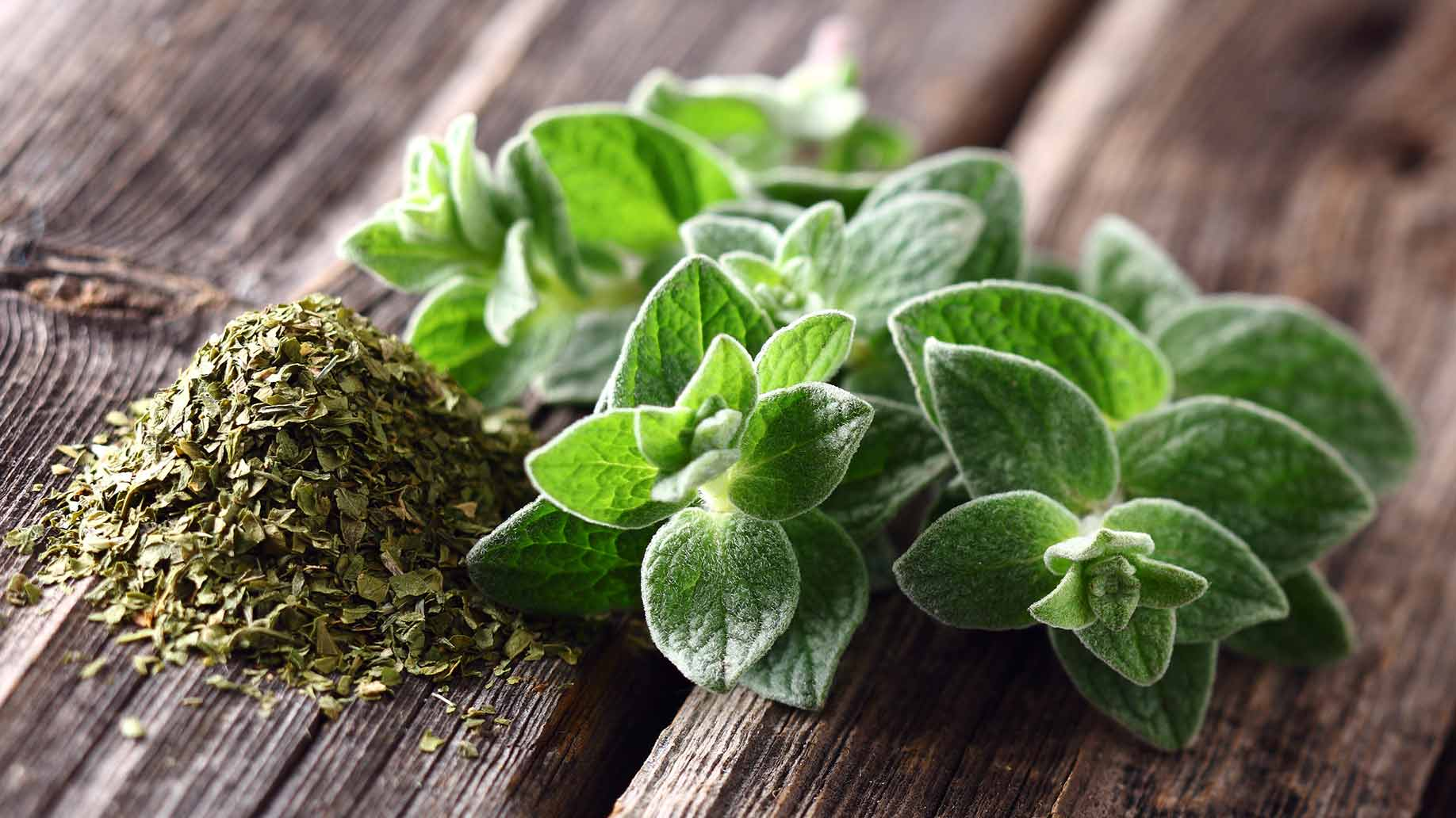 oregano essential oil herb leaves natural health remedies antibacterial antifungal food poisoning cold cough flu