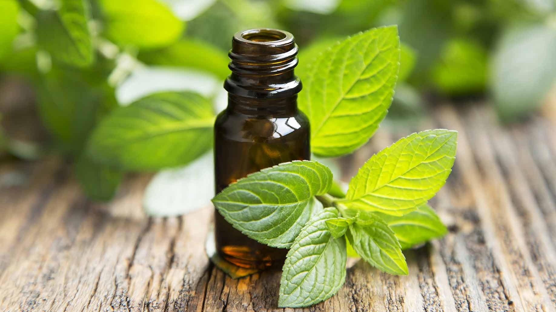 peppermint essential oil natural health benefits indigestion ibs hair growth