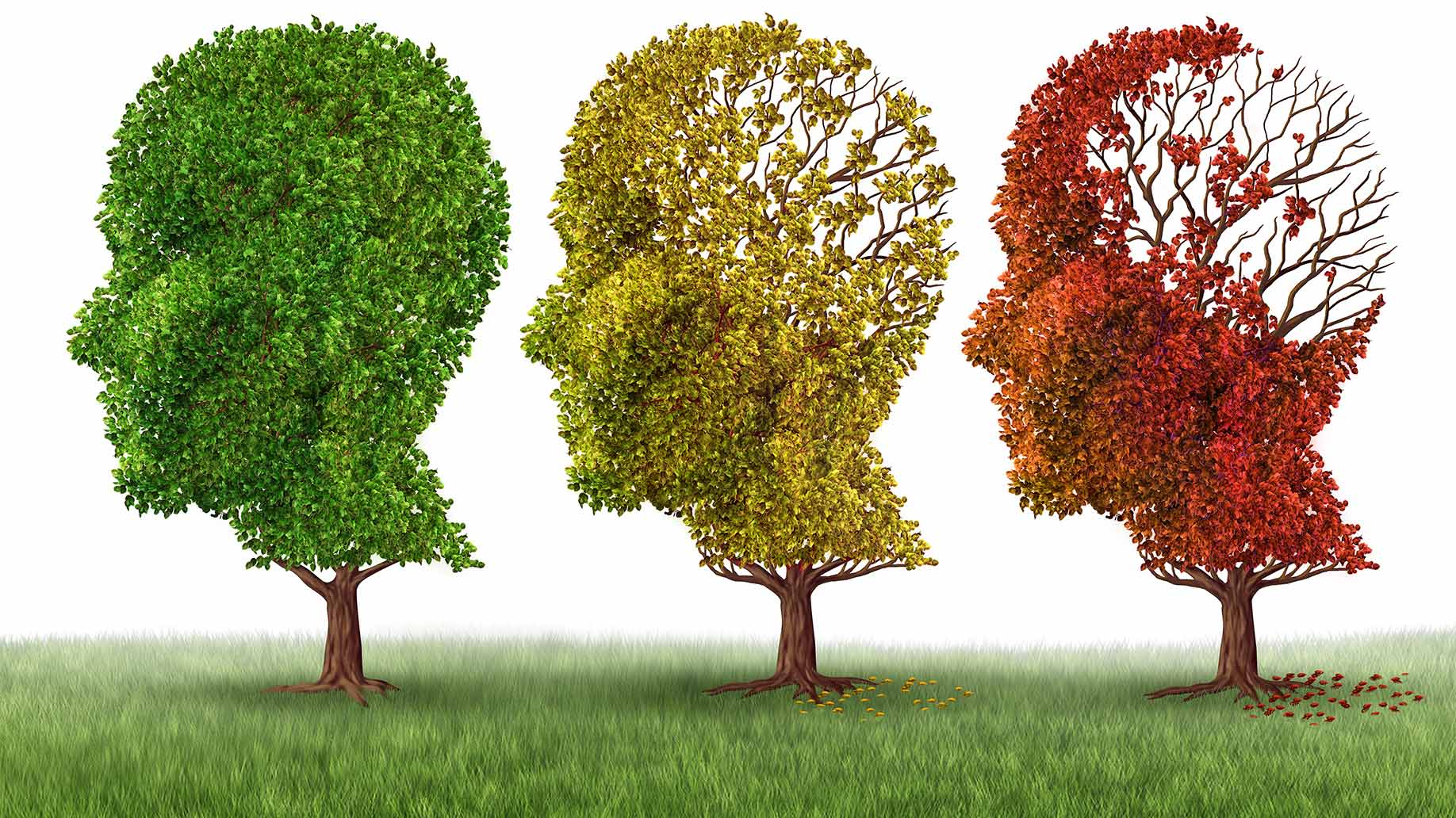 Alzheimers disease dementia memory loss brain cells vitamin d cognition
