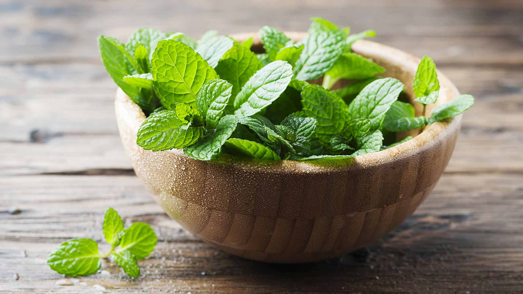 peppermint leaves hair growth natural shampoo ingredient
