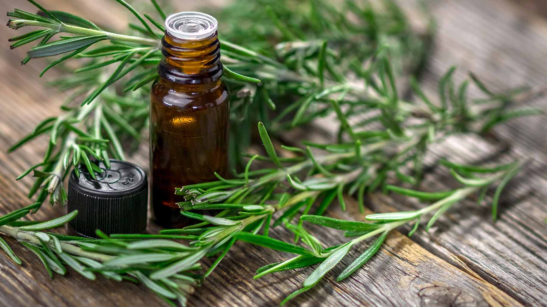 rosemary leaves needles oil shampoo ingredient hair growth balding scalp
