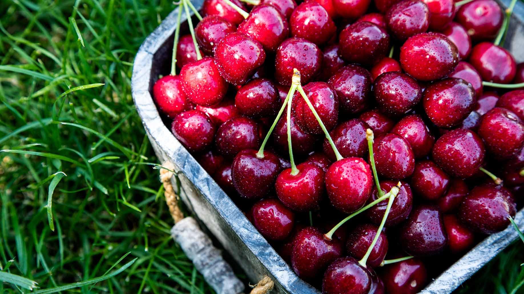 cherries cherry juice melatonin insomnia sleep disorder natural remedy aid