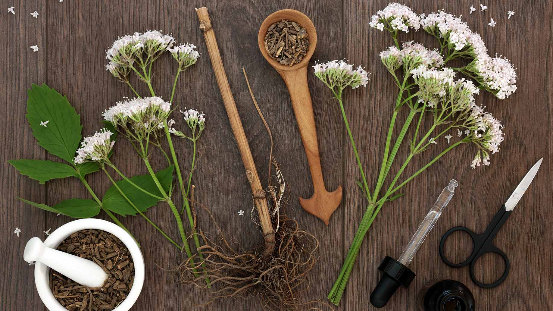 valerian herb root flowers gaba sleep insomnia natural remedies aid