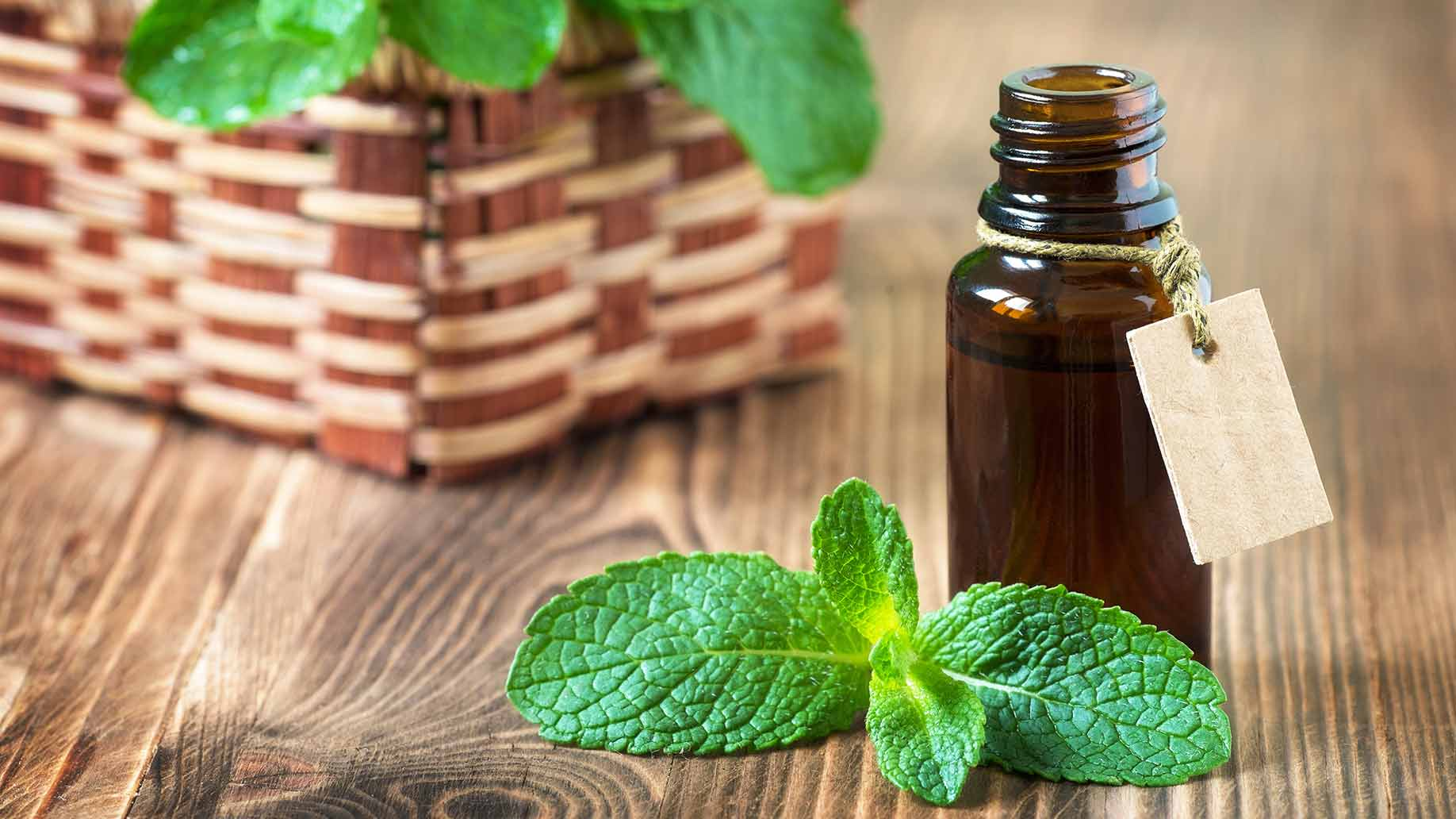 peppermint oil aromatherapy leaves increase boost energy levels natural remedies.